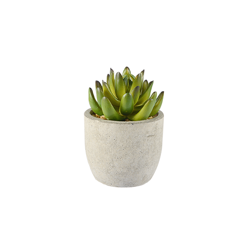 Mexican Snowball Faux Potted Succulent